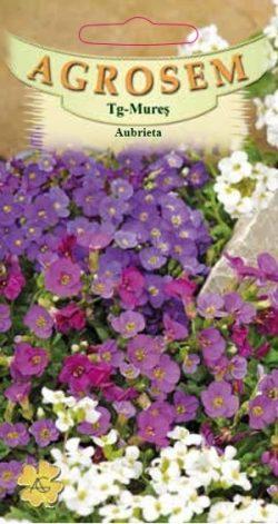 Aubrieta mix Aubrieta Hybrida