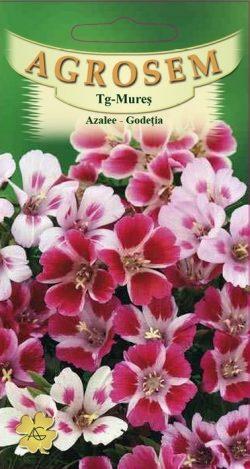 Azalee – Godetia mix Godetia Grandiflora