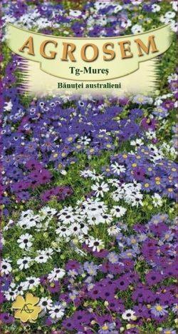 Banusei australieni mix Brachycome  Iberidifolia