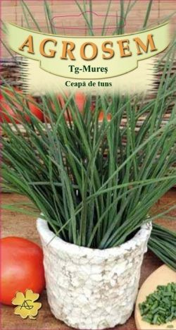 Ceapa de tuns Allium Schoenoprasum