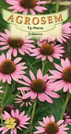Echinacea  Echinacea Purpurea