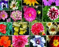 Seminte flori