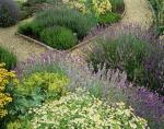 Seminte plante aromate